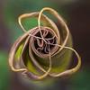 Jimsom weed Datura stramonium