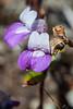 PurpleFlower5287