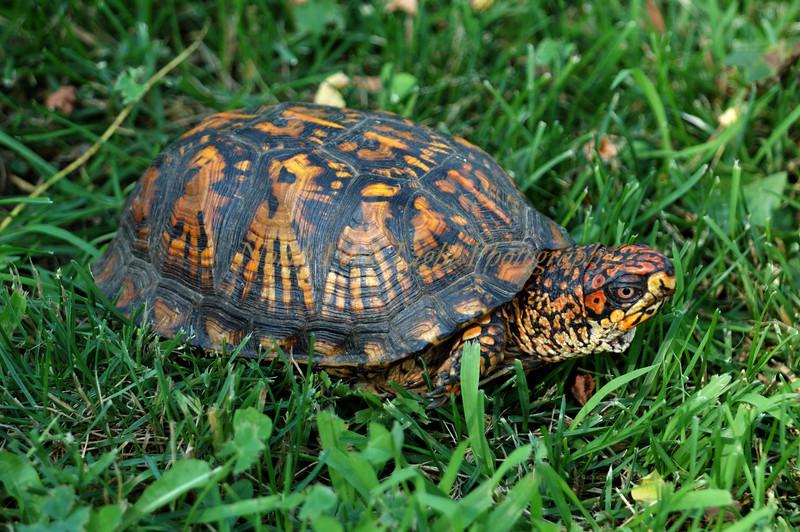 Turtle Interruptis