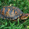 Turtle Interruptis