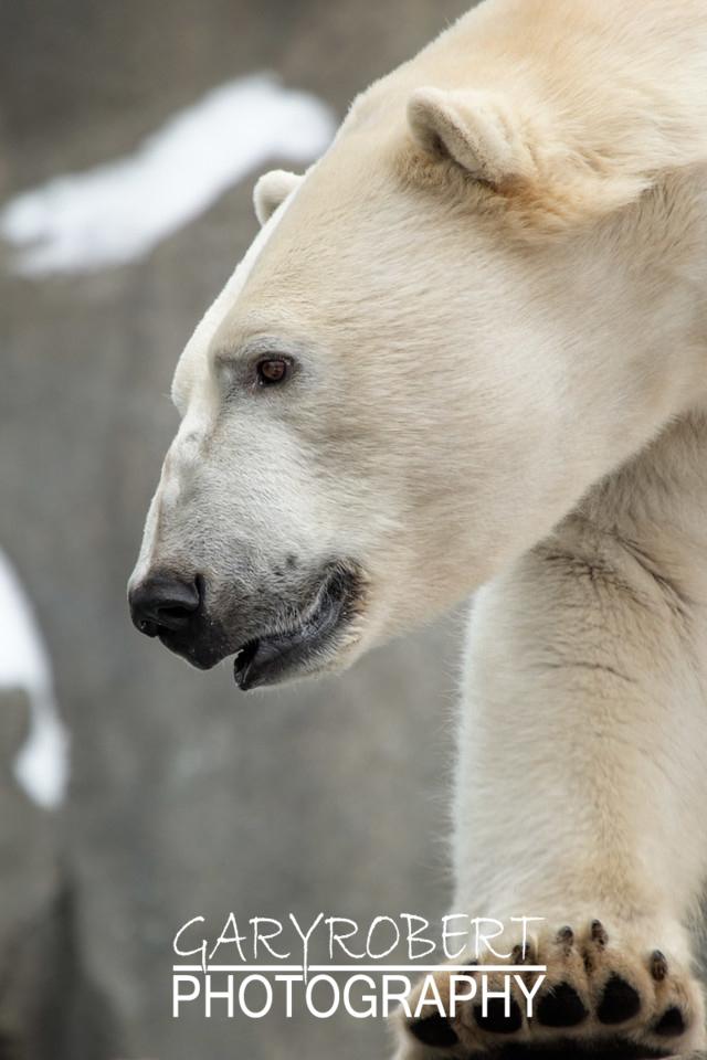 Polar Big Foot