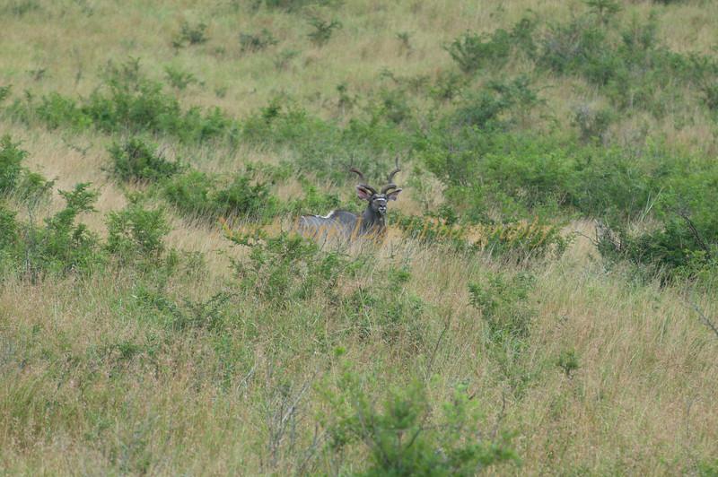Kudu something to me