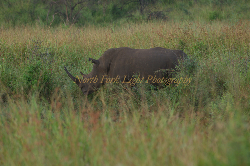 Fifteen minutes into our first safari we spot a white rhino.