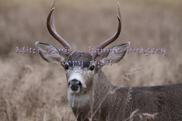 Nature, wildlife and farm animals