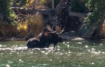 Bull Moose Crossing Lake  (EM-19206)