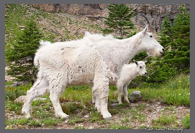 (SG-07007)  Mountain Goats - Nanny and Kid