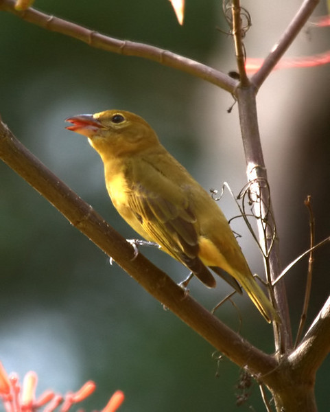 tanager_filtered