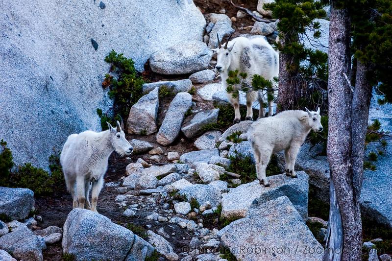 Mountain Goat Clan