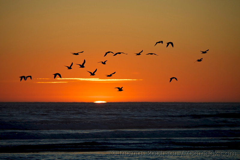 Silhouetted seagulls soar silently above the sublime sea at sunset.