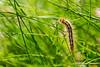 Caterpillar on the Grass