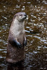River Otter Perch