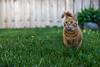 Backyard Cat