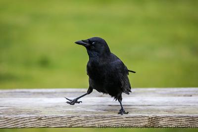 Crow Step