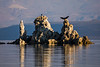 Mono Lake Osprey Landing
