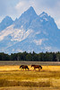 Wild Horses and Grand Tetons, Vertical