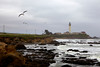 Seagulls fly along the coastline at Pigeon Point Lighthouse south of Half Moon Bay.