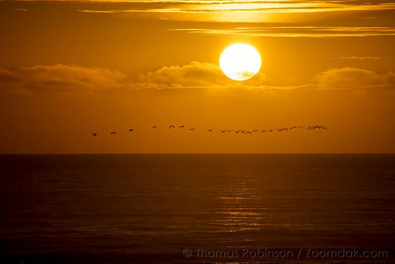 Pelican Flock at Sunset