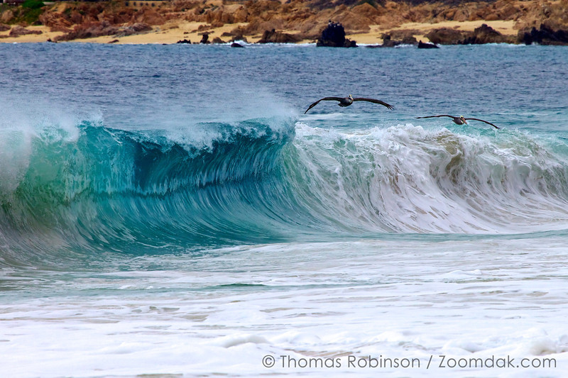 Two brown pelicans (Pelecanus occidentalis) fly just above the breaking waves along the Cabo coastline in Mexico.