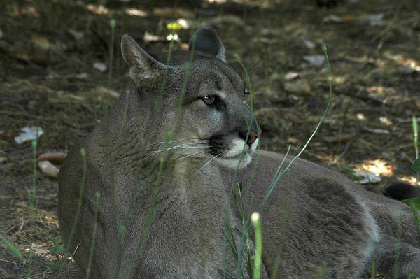Wildlife Safari and Wildlife Images in Oregon