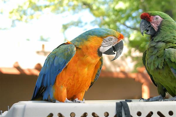 Wildlife Wendy's Tropical birds
