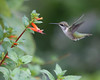 Humming Bird Sanctuary 8-17-14