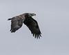 Centerport Eagle Shoot #2
