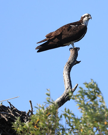 Cutchgue Wildlife 7-9-17