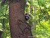 Forest Bandit