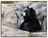 Bear enjoying a bath
