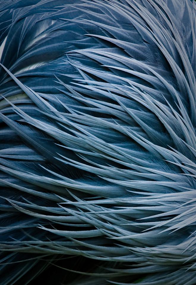Feathers DSC_0698