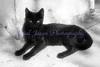 Black Cat, Valpariso, Chile