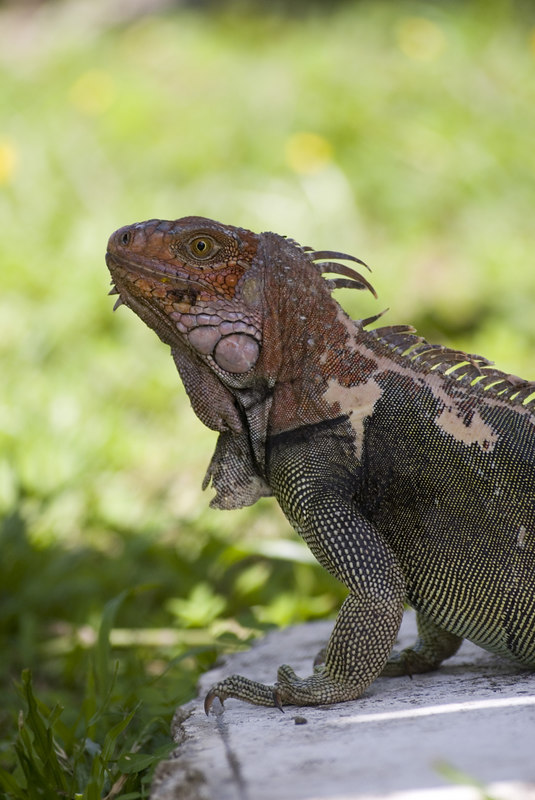 Costa Rican Wildlife photographed by a professional wildlife and nature photographer named Christina Craft.