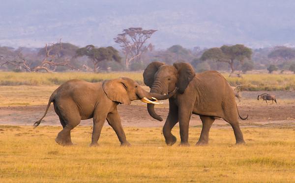 Wildlife of Kenya & Tanzania