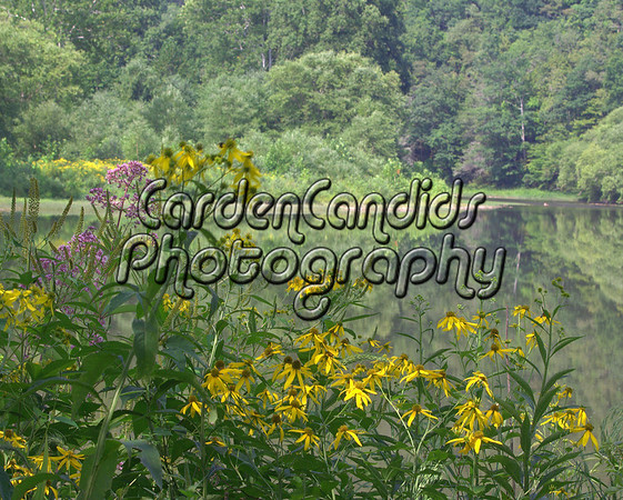 Wildlife on the Greenbrier River in West Virginia. Photos by CardenCandids Photography