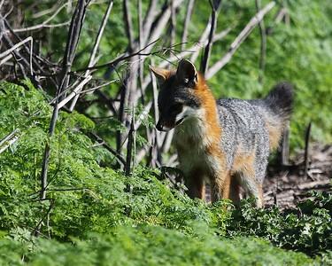 Coyote Hills Feb 12  45