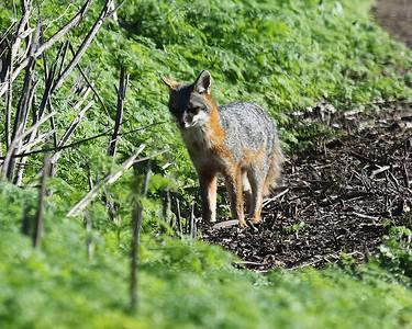 Coyote Hills Feb 12  35