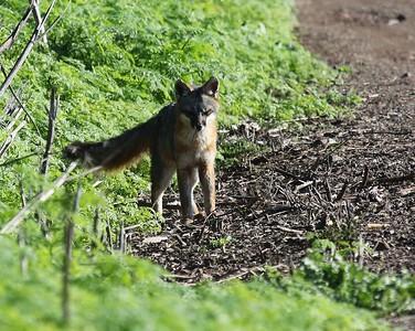 Coyote Hills Feb 12  34