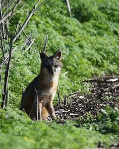 Coyote Hills Feb 12  39