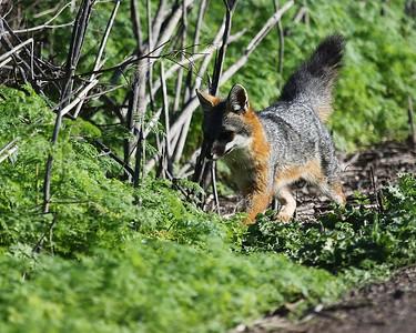Coyote Hills Feb 12  43
