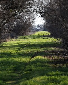 San Luis Merced NWR Dec27  357