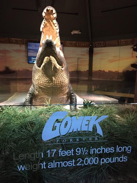 World's largest known alligator