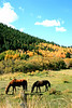 Two Horses in Colorado
