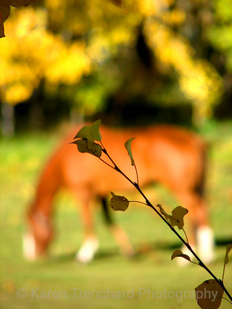 Horse in High Country,fall