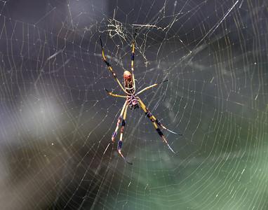 oh yeah.... and the swamp had REEEEEEEEEALLLY BIG SPIDERS!