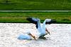 Pelicans Landing