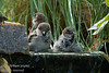 Sparrows making a big Splash