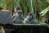Sparrows making a big Splash