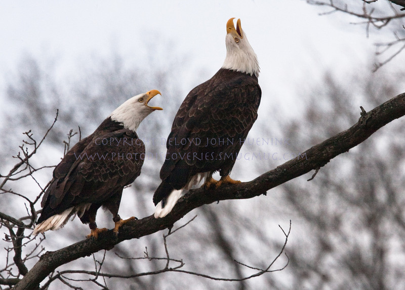 EAGLES I HAVE KNOWN-8126