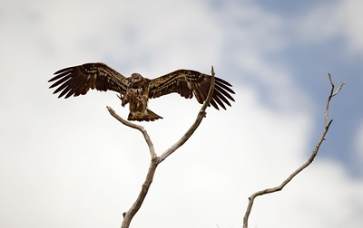 _K8F2350 (Young Eagle Landing)