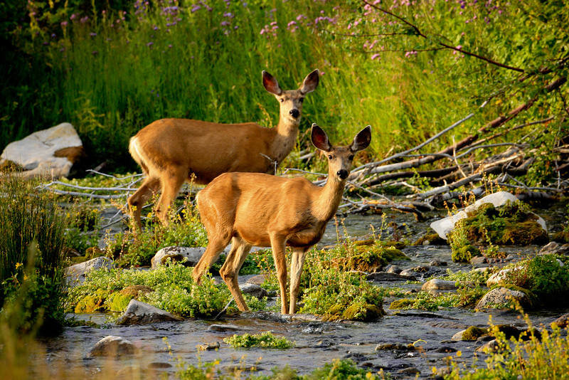Cascade Springs, Uintah mountains, Utah wilderness